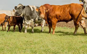 BRITISH FARMERS STICK TOGETHER