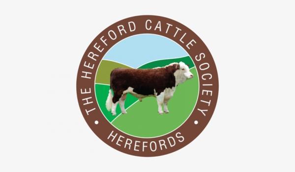 Eldersfield Pedigree Hereford Heifer