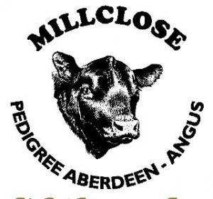 Millclose Pedigree Aberdeen - Angus