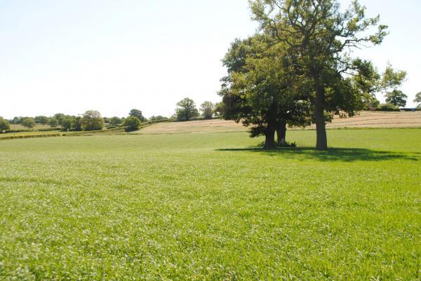 Land at Dark Lane, 14 Acres, £150,000