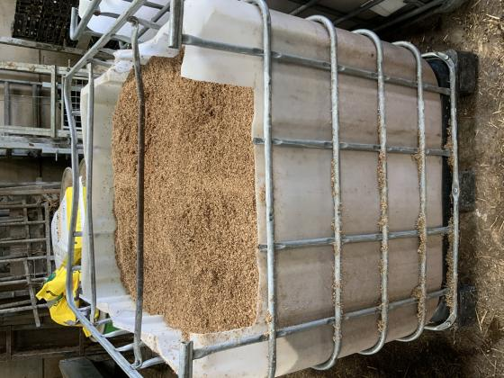 Brewers Grains