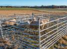 KELLFRI SHEEP GATE 1.5 M