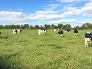 South East Dairy Stock