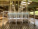 20 ATL OUT OF PARLOUR FEEDS FOR SALE