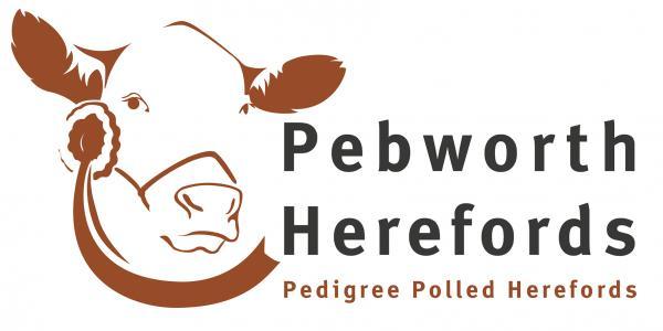 Pebworth Herefords