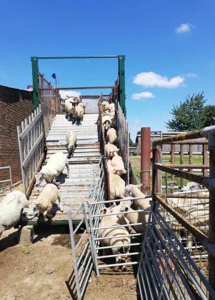 MOBILE SHEEP DIPPER