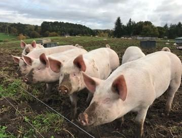 Organic Pig Finishing Opportunity