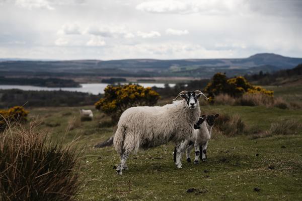 Brannach Olann - Giving Farmers A Fair Cut