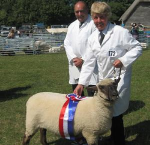 lamb breeding and lamb meat available at Tullens Fruit Farm in West Sussex, UK.